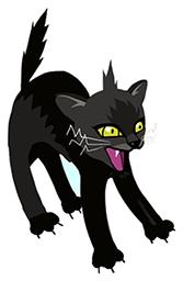 cat-04