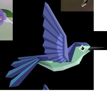 hummingbird-up